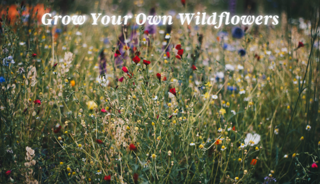Get a Wildflower Kit in Celebration of Earth Day